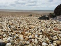 Seashell, Shore, Pebble, Sea royalty free stock photography