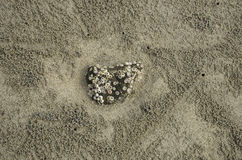 Seashell, skała, krab dziury, piasek plaża Zdjęcie Royalty Free