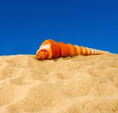 Seashell on sky background Stock Photography