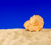 Seashell on sky background Stock Photo