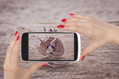 Seashell snapshot. Stock Image