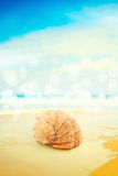 Seashell sobre o mar Foto de Stock
