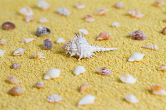 Seashell. Some shells scattered on a yellow towel royalty free stock photo