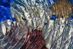 Seashell sotto acqua Fotografia Stock Libera da Diritti