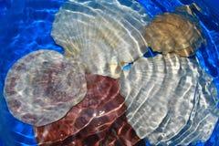 Seashell sotto acqua Fotografia Stock