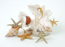 Seashell spa Stock Photo