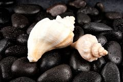 Seashell and spa stones with droplets on black background Royalty Free Stock Images