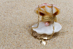 Seashell special gifts Stock Images