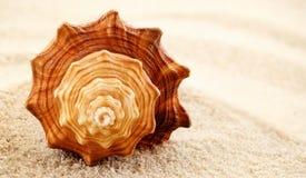 Seashell a spirale. immagine stock libera da diritti