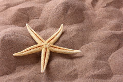 Seashell Stock Photo