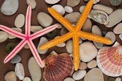 Seashell and starffish Royalty Free Stock Image