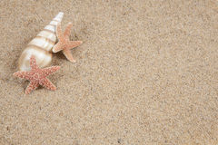 Seashell and starfish  Stock Images