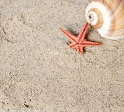 Seashell and starfish Royalty Free Stock Images