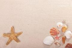Seashell and starfish Royalty Free Stock Photography