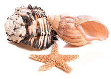 Seashell and Starfish Collection Stock Photos