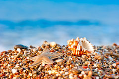 Seashell and starfish on a pebble beach on sea background Stock Photo