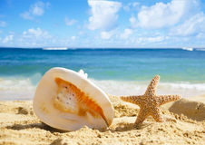 Seashell and starfish on sandy beach. Big Seashell and starfish on sandy beach in Hawaii, Kauai Royalty Free Stock Photography