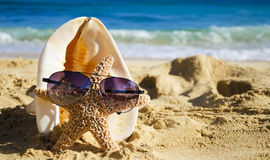 Seashell and starfish with sunglasses on sandy beach Royalty Free Stock Image