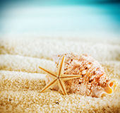 Seashell and starfish on a tropical beach Royalty Free Stock Image