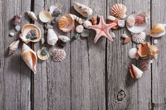 Seashell and starfish on wooden background Royalty Free Stock Photos