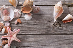 Seashell and starfish on  wooden background Stock Photo