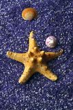 Seashell and starfishes on lilac sand Royalty Free Stock Image