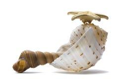 Seashell Still Life Royalty Free Stock Photo