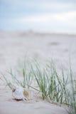 Seashell still life Stock Images