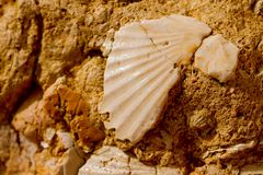 Seashell in stone Royalty Free Stock Images