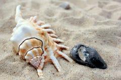 Seashell and stone on beach sand Royalty Free Stock Photo