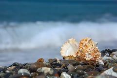 Seashell on stone seacoast Stock Images