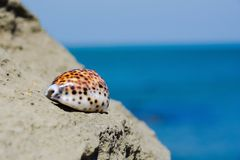 Seashell on stone Royalty Free Stock Photography