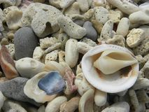 Seashell and stone at the white sand beach stock images