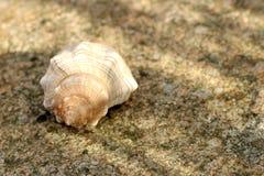 Seashell on a stony beach stock photography