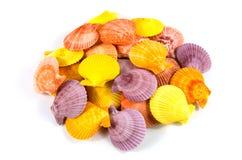 Seashell su priorità bassa bianca Fotografia Stock Libera da Diritti