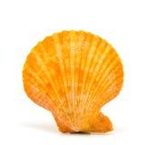 Seashell su priorità bassa bianca Immagine Stock Libera da Diritti