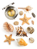Seashell su priorità bassa bianca Immagini Stock