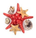 Seashell su priorità bassa bianca Fotografia Stock