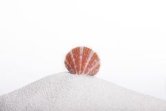 Seashell su un hil della sabbia Fotografie Stock Libere da Diritti