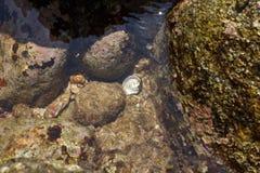 Seashell subaquático Fotos de Stock Royalty Free