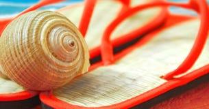 Seashell sui sandali alla spiaggia fotografie stock libere da diritti