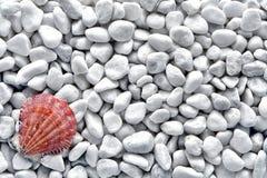 Seashell sulla priorità bassa bianca della spiaggia della spiaggia del ciottolo Fotografia Stock Libera da Diritti