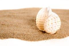 Seashell sulla sabbia fotografie stock