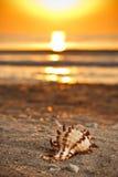Seashell sulla sabbia fotografia stock libera da diritti