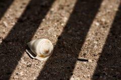 Seashell sulla sabbia Fotografia Stock