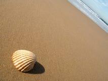 Seashell sulla sabbia bagnata fotografie stock