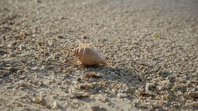Seashell sulla spiaggia della sabbia stock footage