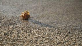 Seashell sulla spiaggia della sabbia archivi video