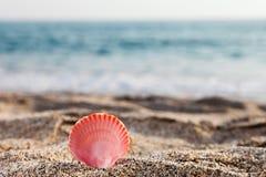 Seashell sulla spiaggia della sabbia di mare Immagini Stock Libere da Diritti