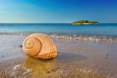 Seashell sulla spiaggia mediterranea calma Fotografia Stock Libera da Diritti